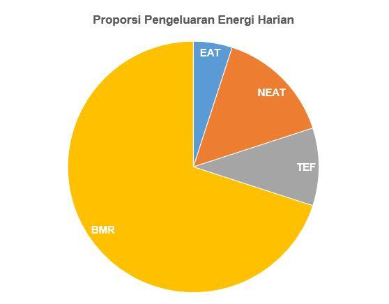 pengeluaran energi harian